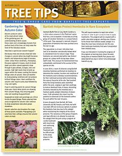 Bartlett Tree Tips - Autumn 2010