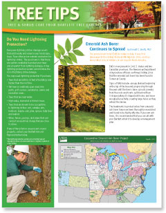 Bartlett Tree Tips - Autumn 2014