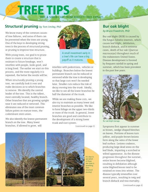 Bartlett Tree Tips - Autumn 2018